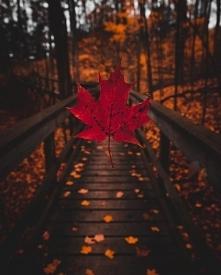 Jesień to taka magiczna pora roku :>