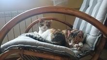 siostrzyczki na bujanym fotelu