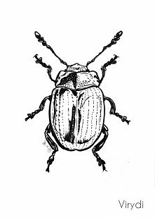 Inktober day 22 - beetles