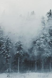 Zimowy las...