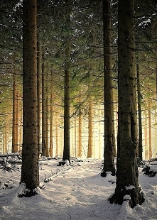 Light beyond trees