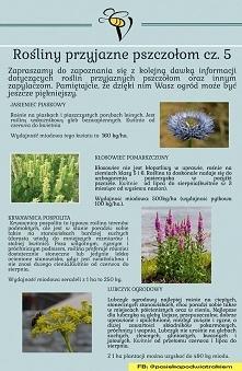 Ogród dla pszczół 5