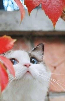 Teoretycznie jeszcze jesień, praktycznie... :-)