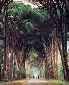 Park Regionalny Migliarino - Włochy.