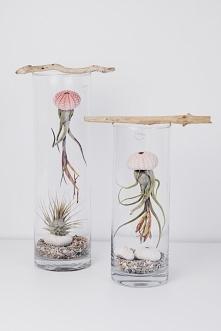 roślinki - meduzy do łazienki
