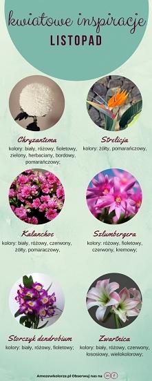 Kwiaty dostępne w listopadzie, które można wykorzystać do dekoracji wesel!