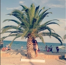 Greckie palmy