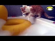 Jak nakłonić kota do kapieli?