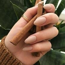 cinnamon <3