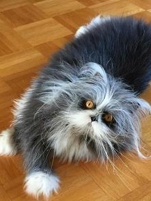 Koteczka.
