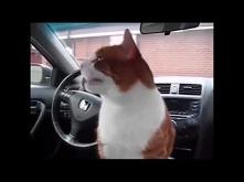 Na zdrowie kotku