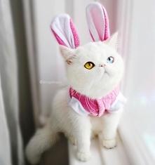 Komu się podoba ten kotek - serduszko. Jest przesłodki i fantastyczny. Sprawd...
