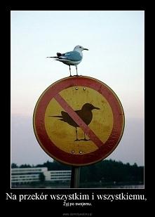 I tak będę latać!
