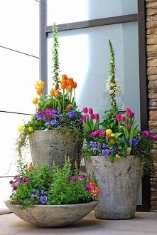 Betonowe doniczki z tulipanami