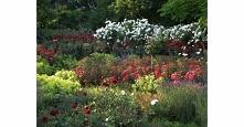 Jak założyć ogród pełen róż?