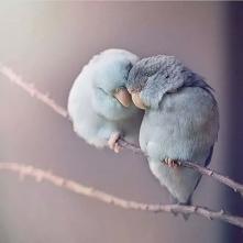 Ile mają miłości♥