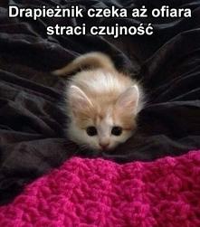 """Z konta """"Dom bez kota ..."""
