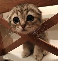 To słodycz tego pięknego kota♥♥♥