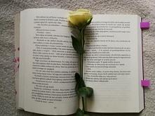 """""""To nie czyny sprawiają najwięcej bólu, lecz miłość. Gdyby czynom nie to..."""