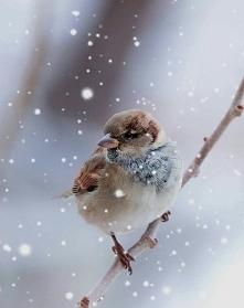 Bird#cold#snow :|