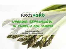 Szparagi w porównaniu do innych warzyw mogą rosnąć rok w rok nawet przez 15 lat! Tę właściwość roślina zyskuje dzięki temu, że jest byliną. Zielone pędy aspargusa mają wiele wła...
