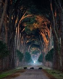 Park Naturalny Migliarino -...