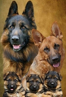 Happy family♥