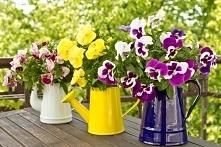 Wiosna na tarasie i balkonie. Jakie rośliny sadzić i jak je pielęgnować?