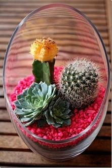 kaktusiki :)