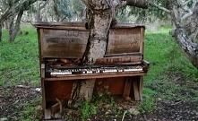 Drzewo w pianinie. Gdzieś w...