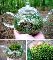 teepot terrarium