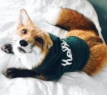 Fox ;)