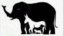 Ile zwierząt widzisz na obrazku. .?
