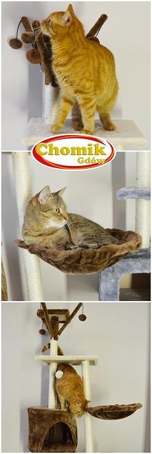 Drapaki i domki dla kotów w...
