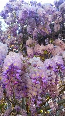 Uwielbiam wiosnę i ten zapa...