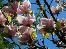 """""""Możemy narzekać, że różane krzewy mają ciernie lub cieszyć się, że cierniste krzewy zakwitają różami"""" Abraham Lincoln"""