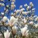 Wiosna w Powsinie
