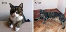 Stawiamy na Łapy  Ogłoszenie grzecznościowe : Kraków  Maciuś (11 lat) oraz Mićka (12 lat) to kot i kotka, dorastali razem i są jak brat z siostrą. Szukają kochającego domu i spo...