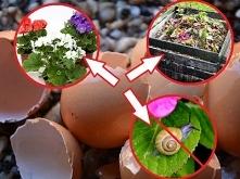Nawóz ze skorupek jajek. Jak zrobić i stosować?