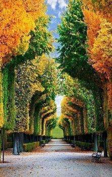 Ogrody Schönbrunn - Wiedeń