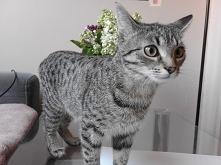 koci czas na miłosć - pisane z humorem z puntu widzenia kota ;) (klik)