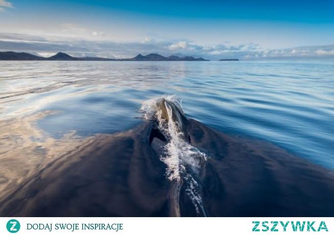 Pływanie z delfinami na Maderze