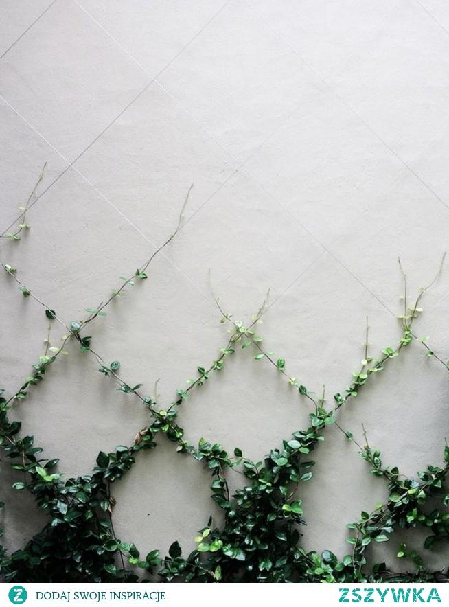 Pomysł na rośliny ; )
