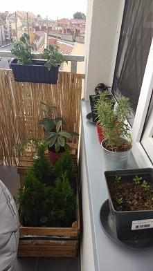 Moj maly ogrod ;)