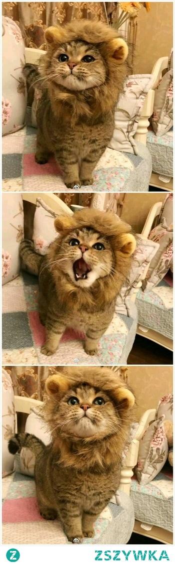 Kotek w przebraniu lwa - cudo ♥♥