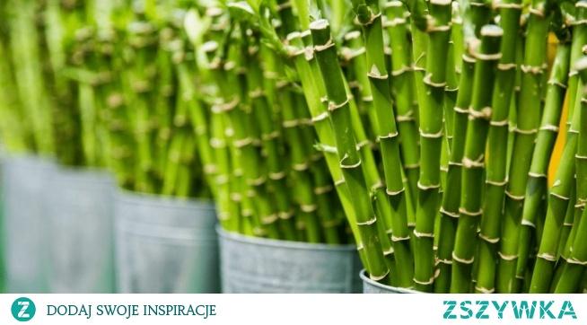 Jakie rośliny wybrać do domu, żeby nie trzeba było dużo czasu poświęcać na ich pielęgnację? Z wpisu dowiecie się jakie rośliny idealnie sprawdzą się w domu osób wiecznie zabieganych. Zapraszam!
