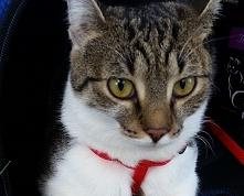 Kociaki słodziaki ;)