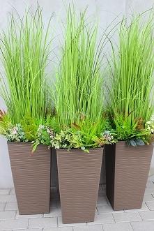 trawy ozdobne - tenDOM