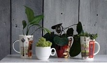 Rośliny w kubkach  HAART bl...
