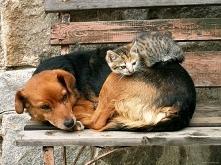 Czy to jest przyjaźń czy to jest kochanie?